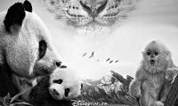 自然电影票房不佳 真熊猫为何卖不过