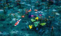 日本神社鲤鱼池神似莫奈画作