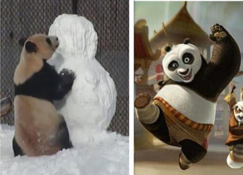 熊猫大毛学《功夫熊猫》手撕雪人 全球超100万人观看