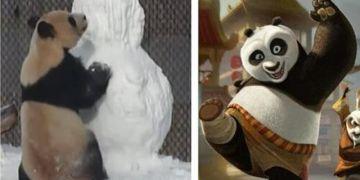 熊猫大毛学《功夫熊猫》手撕雪人