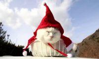 《冰雪奇缘》音乐会指挥称圣诞老人不存在 被解雇!