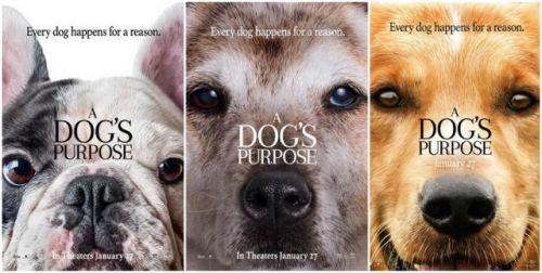 前前前世见过你 《一条狗的使命》有望引入国内