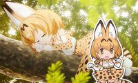 《兽娘动物园》的契机是真实的薮猫