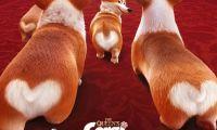 动画电影《女王的柯基》发布定档预告和海报