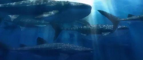 """动画《海兽之子》定档11月20 遇见这场""""最清澈的海洋风暴""""震撼视听呈现"""